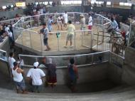 Asisbiz Philippines Puerto Garlera cock fighting arena 01