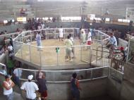 Asisbiz Philippines Puerto Garlera cock fighting arena 04