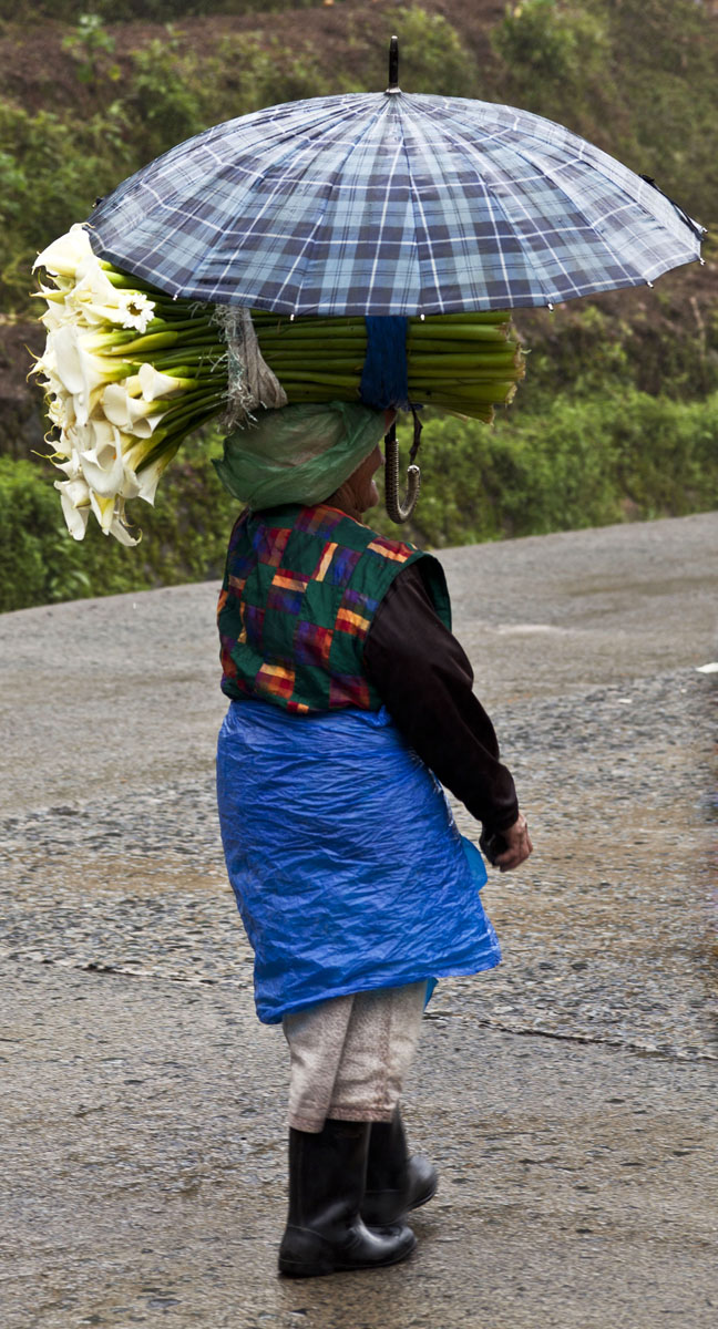 Carring flowers along the Kabayan Rd Halsema Highway from Baguio to Sagada Aug 2011 01
