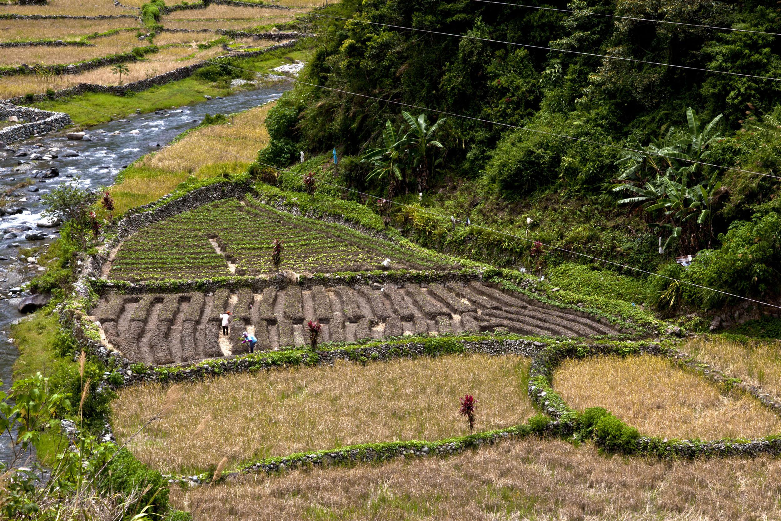 Panoramic views along the Kabayan Rd Halsema Highway from Baguio to Sagada Aug 2011 39
