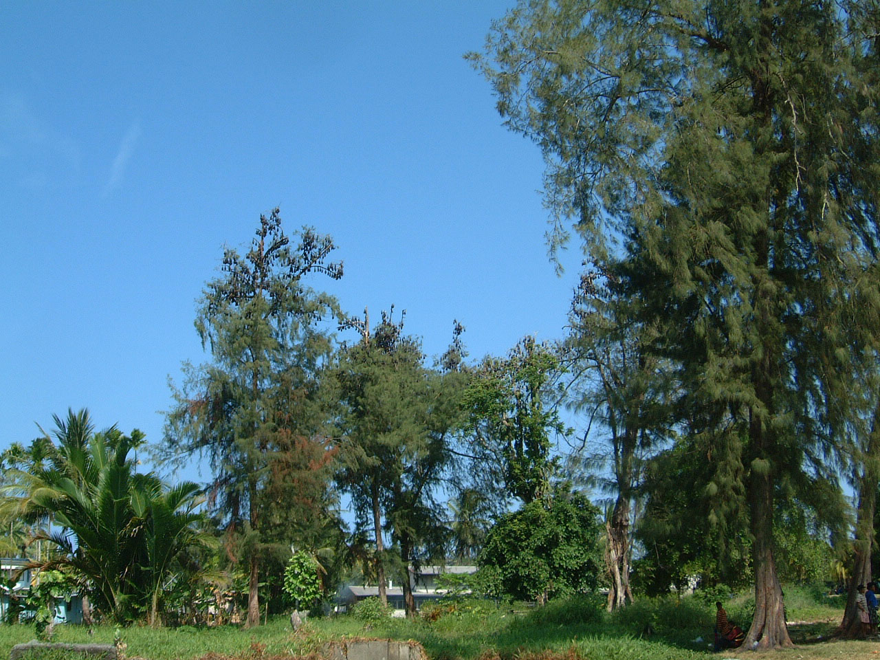 Bats PNG Madang 02