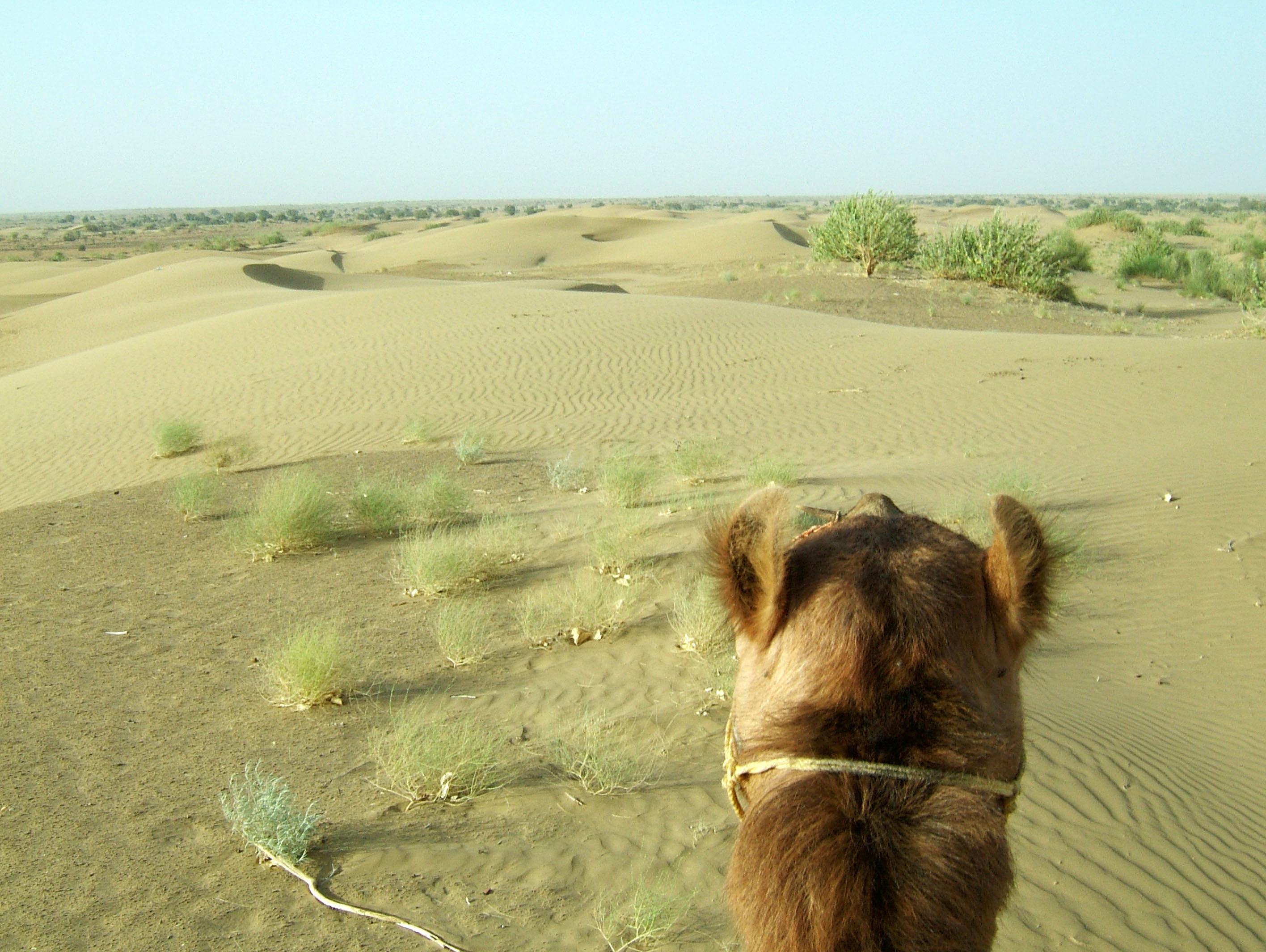 Camel Safari India Rajasthan Jaisalmer 18