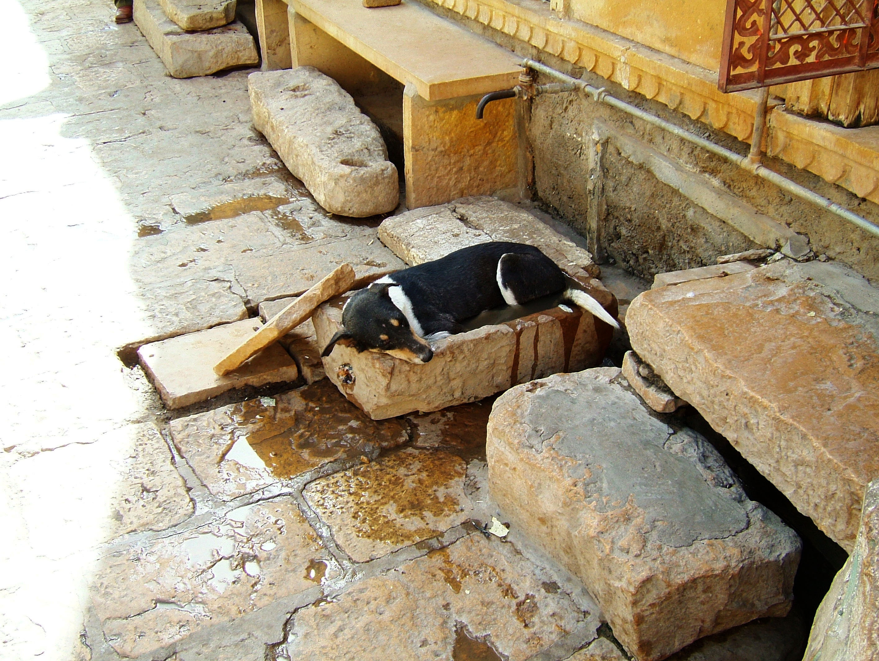 Dog cooling off India Rajasthan Jaisalmer Fort 01