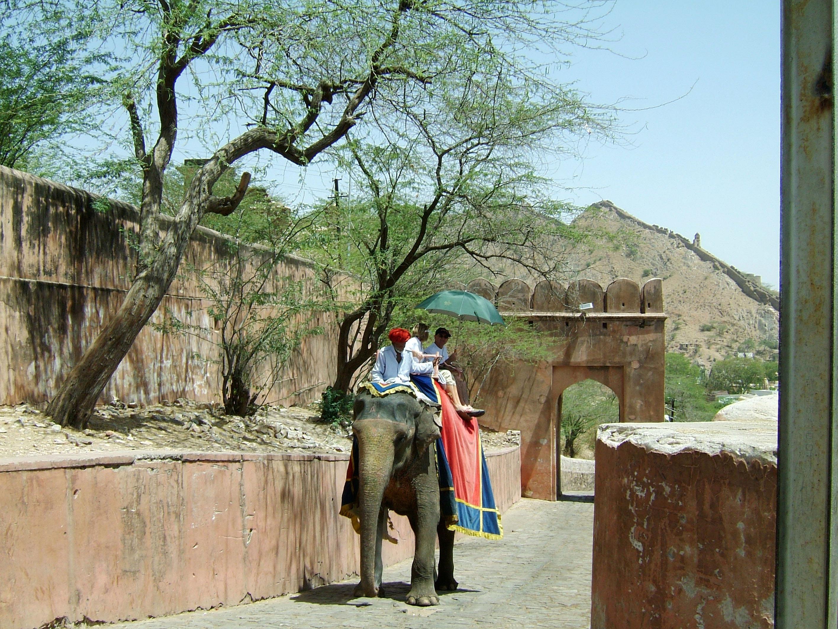 Elephant India Rajasthan Jaipur Amber Fort 01