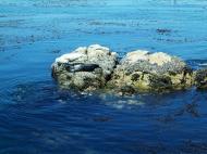 Asisbiz California Monterey Carmel marine life seals Aug 2004 01