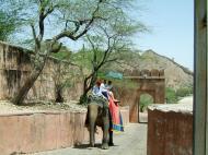 Asisbiz Elephant India Rajasthan Jaipur Amber Fort 01