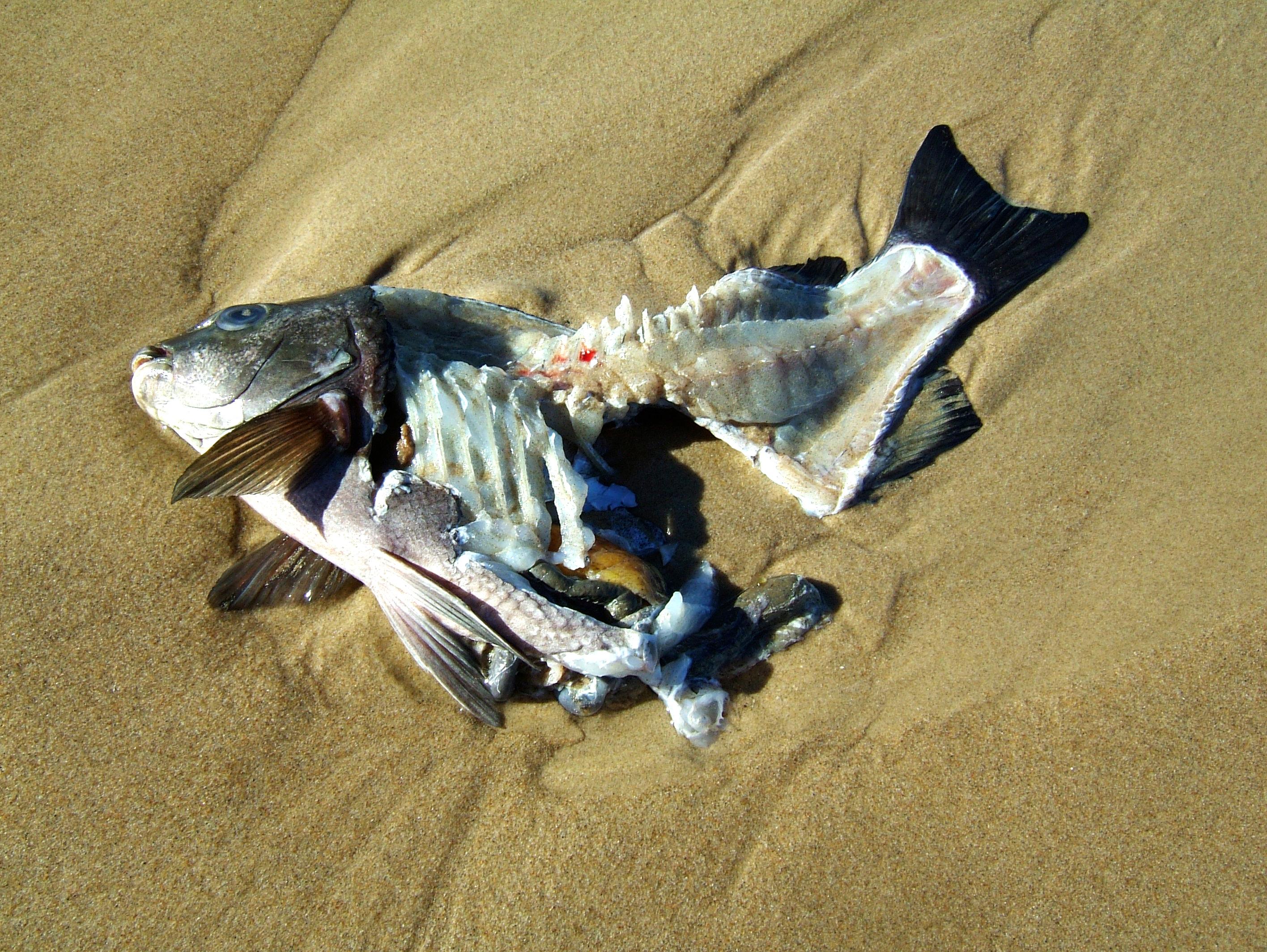 Textures Beach Life Fish Marcus 02