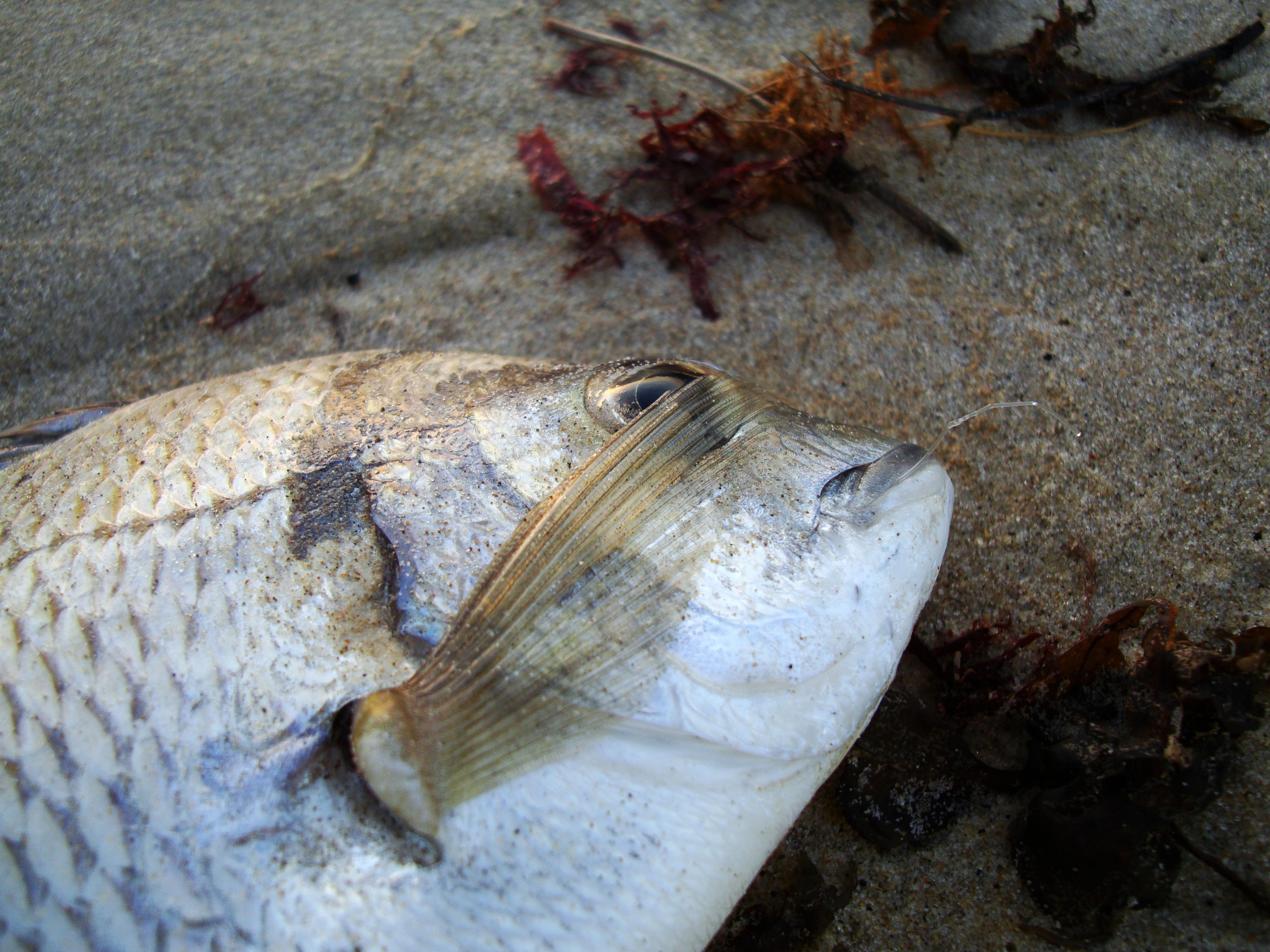 Textures Beach Life Fish Noosa 02