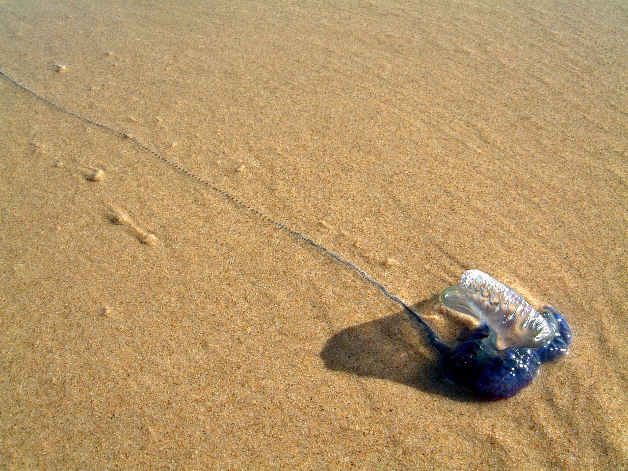 Textures Marcus Beach Life Blue Bottle 03