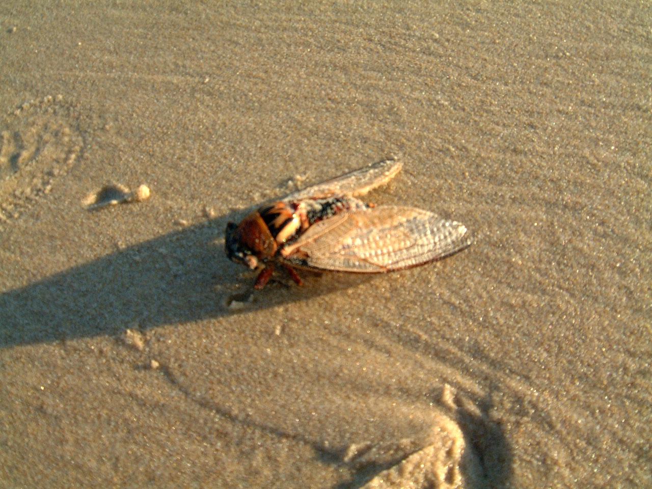 Textures Marcus Beach Life Bugs 01