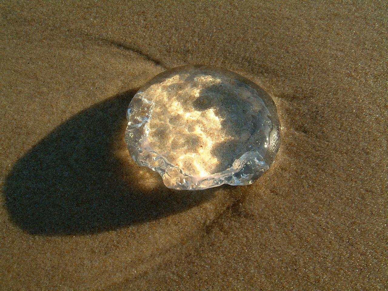 Textures Marcus Beach Life Clear Jellyfish 02