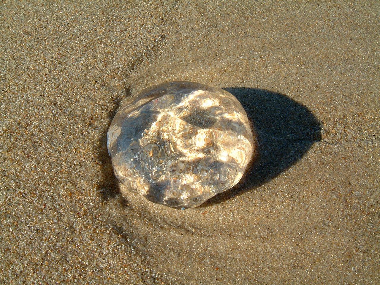 Textures Marcus Beach Life Clear Jellyfish 05