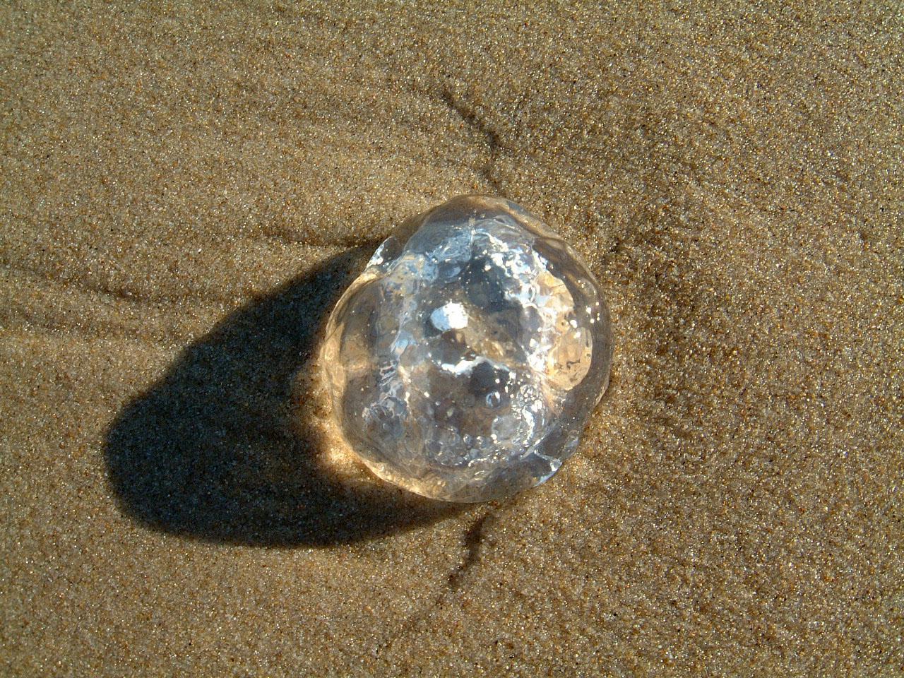 Textures Marcus Beach Life Clear Jellyfish 10