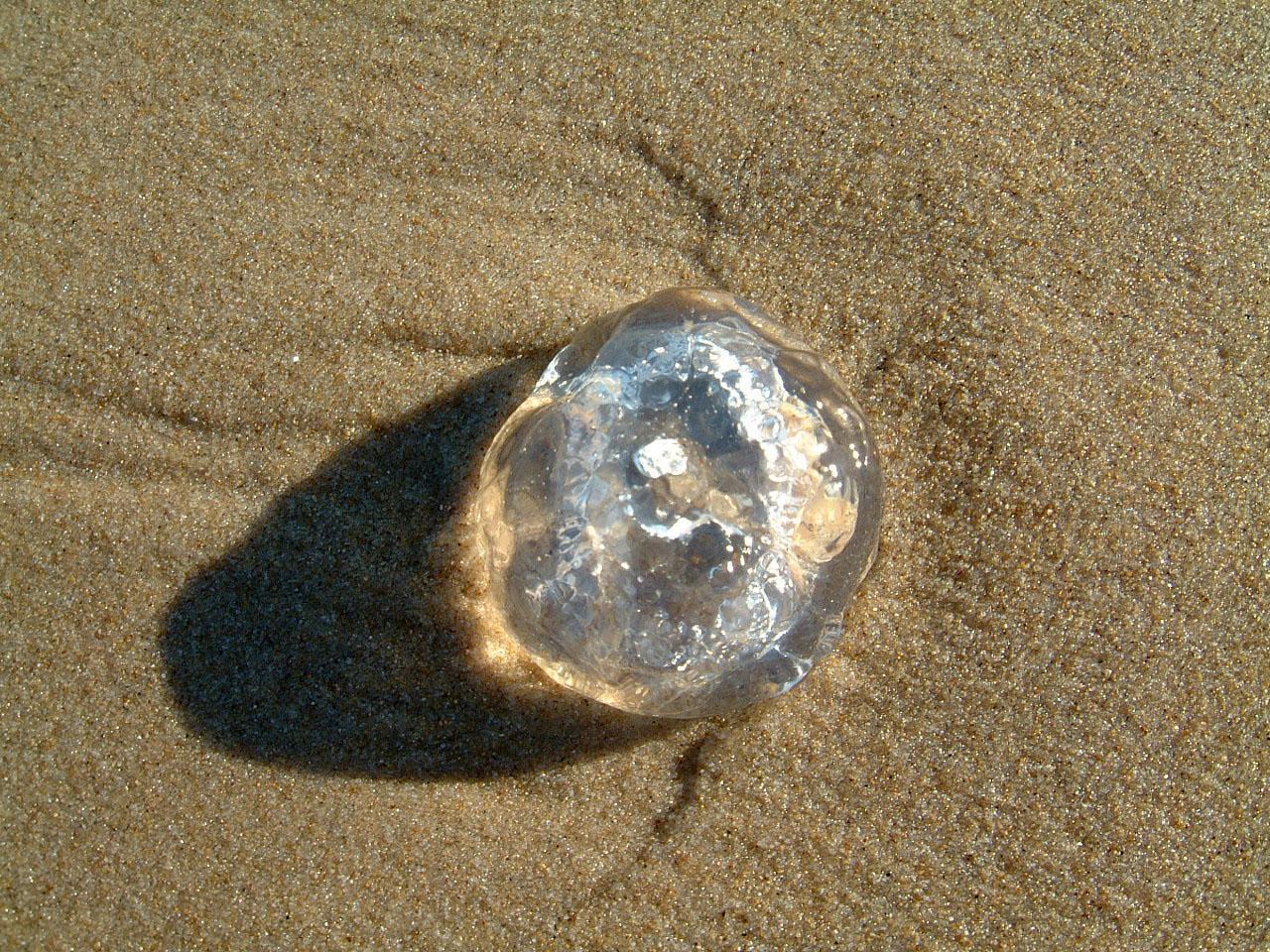 Textures Marcus Beach Life Clear Jellyfish 11