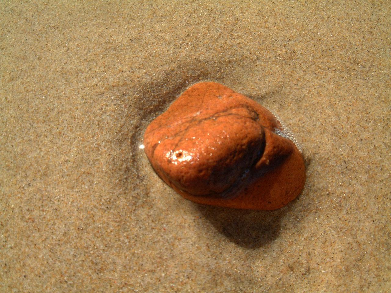 Textures Marcus Beach Life Rocks 03