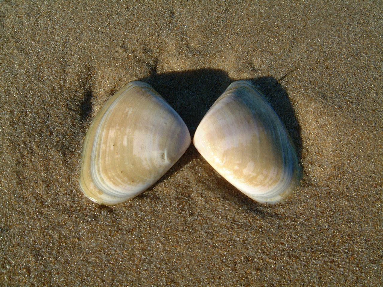 Textures Marcus Beach Life Sand Shells 04