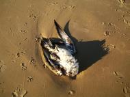 Asisbiz Dead seabird Marcus Beach Queensland 2009 01