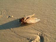 Asisbiz Textures Marcus Beach Life Bugs 01