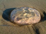 Asisbiz Textures Marcus Beach Life Clear Jellyfish 06