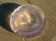 Asisbiz Textures Marcus Beach Life Clear Jellyfish 08
