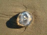 Asisbiz Textures Marcus Beach Life Clear Jellyfish 11