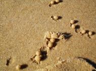 Asisbiz Textures Marcus Beach Life Crab 02