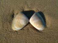 Asisbiz Textures Marcus Beach Life Sand Shells 04
