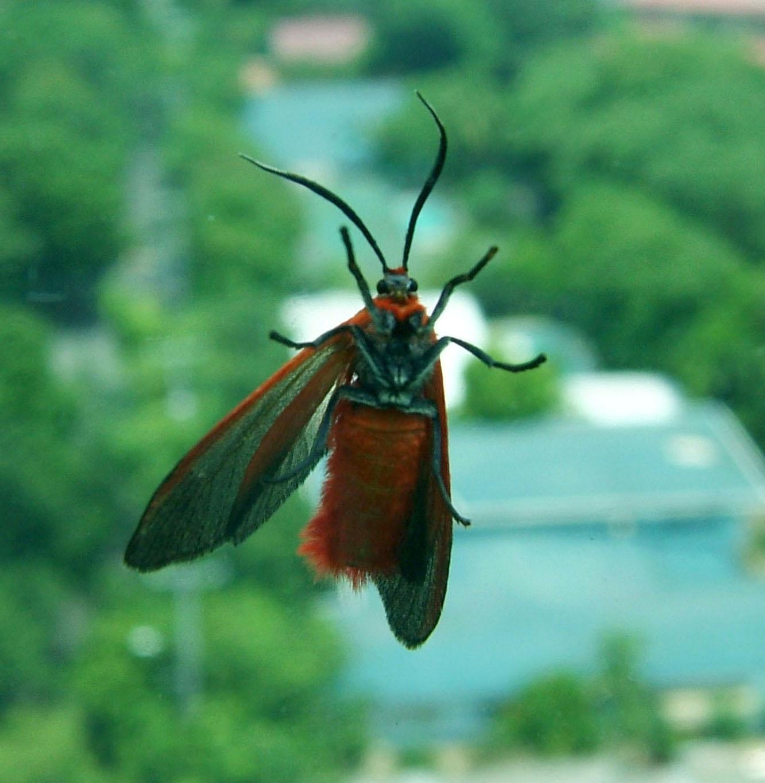 Bug Philippines Manila 01