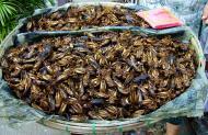 Asisbiz Bugs for dinner cooked grasshoopers Yangon Shwedagon Pagoda 01