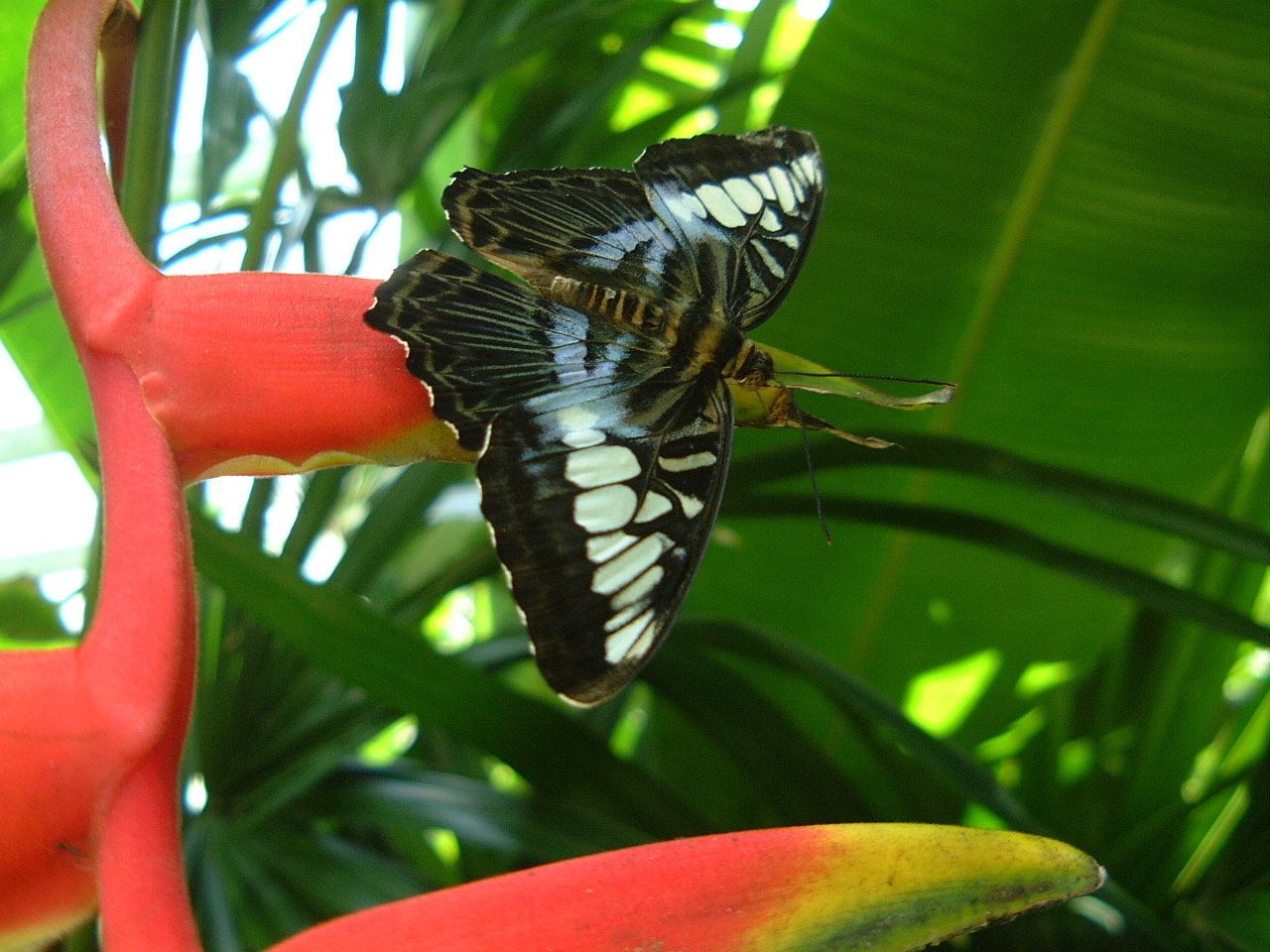 Butterfly Malaysia Penang Butterfly Park 14