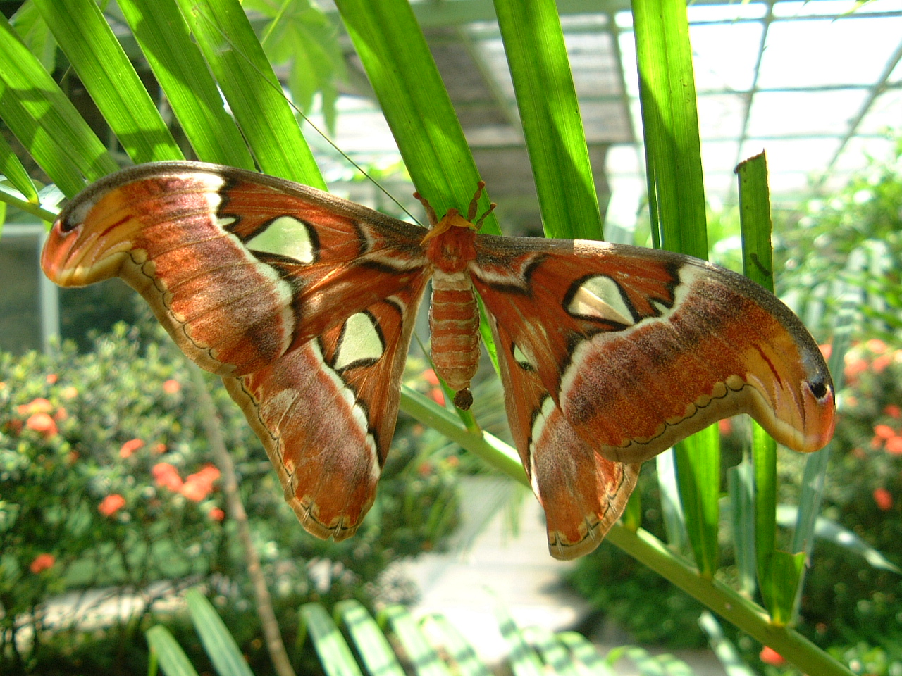 Butterfly Malaysia Penang Butterfly Park 22