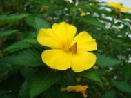 Asisbiz Butterfly Philippines 02