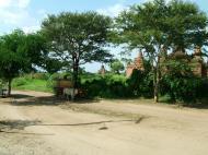 Asisbiz Buffalo Cart Myanmar Pagan 01