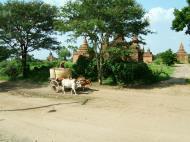 Asisbiz Buffalo Cart Myanmar Pagan 02