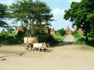 Asisbiz Buffalo Cart Myanmar Pagan 03