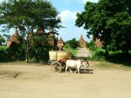 Asisbiz Buffalo Cart Myanmar Pagan 04