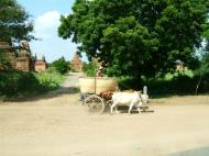 Asisbiz Buffalo Cart Myanmar Pagan 05