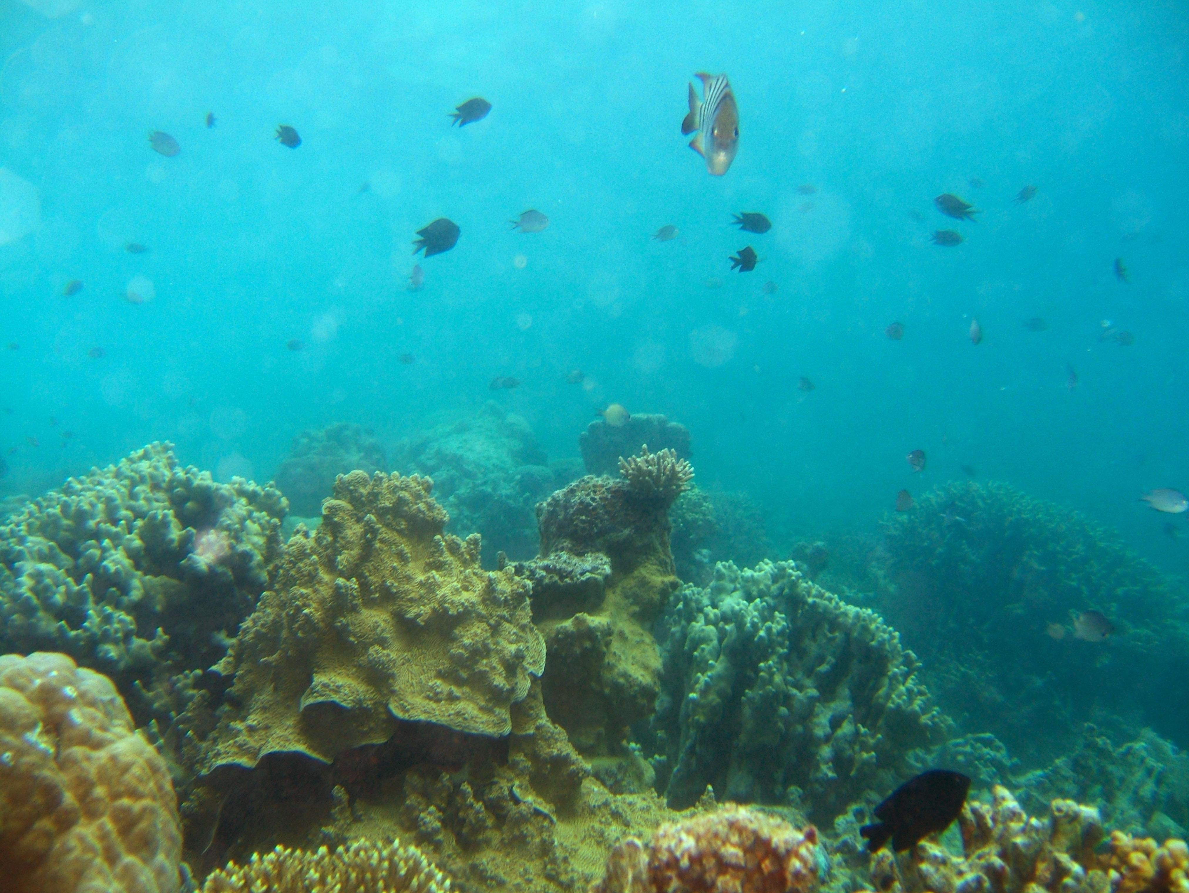 Coron dive site 11 Cay Angan Lake Baracuda Lake July 2005 29
