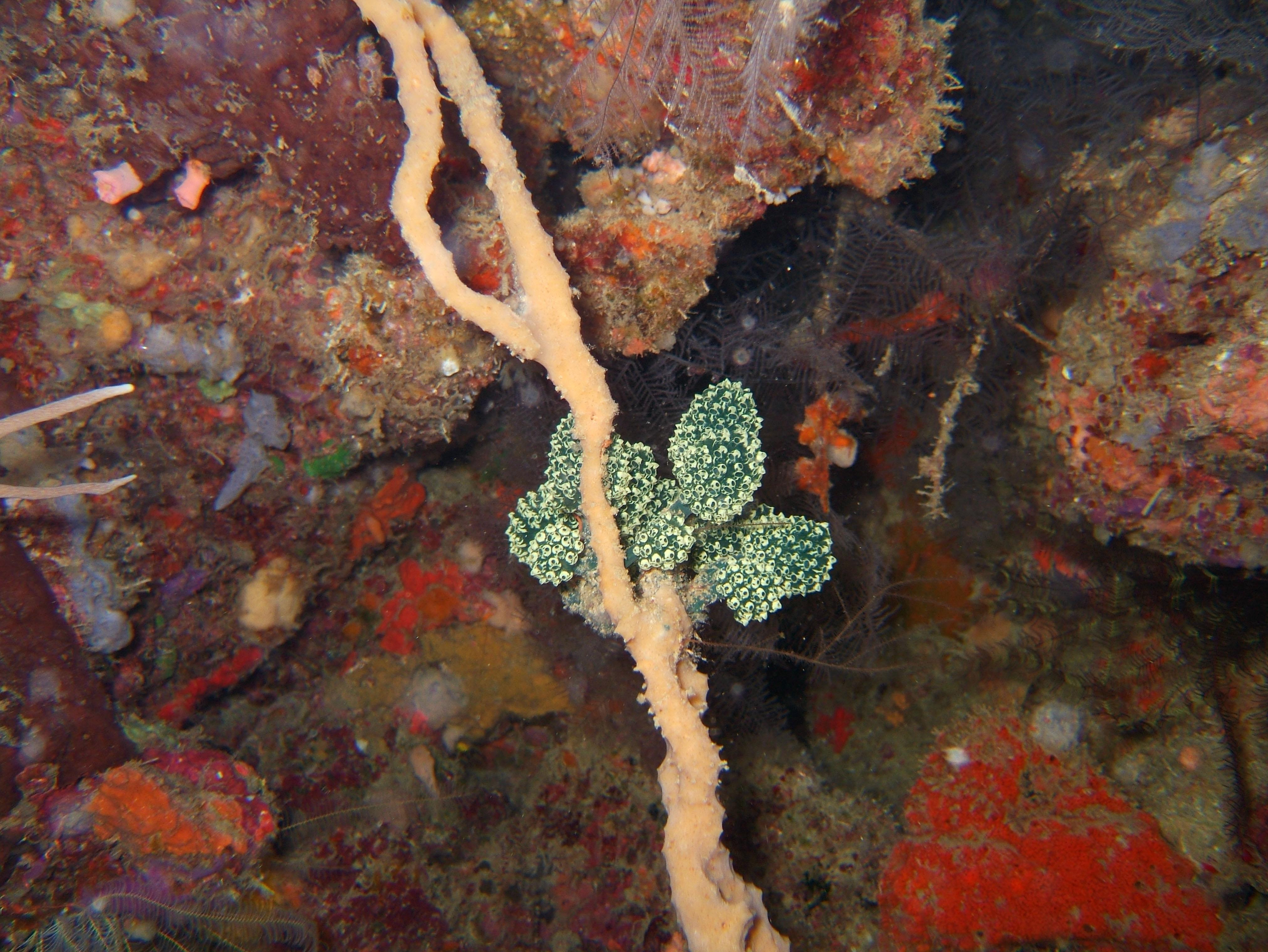 Coron dive site 11 Cay Angan Lake Baracuda Lake Reef July 2005 04