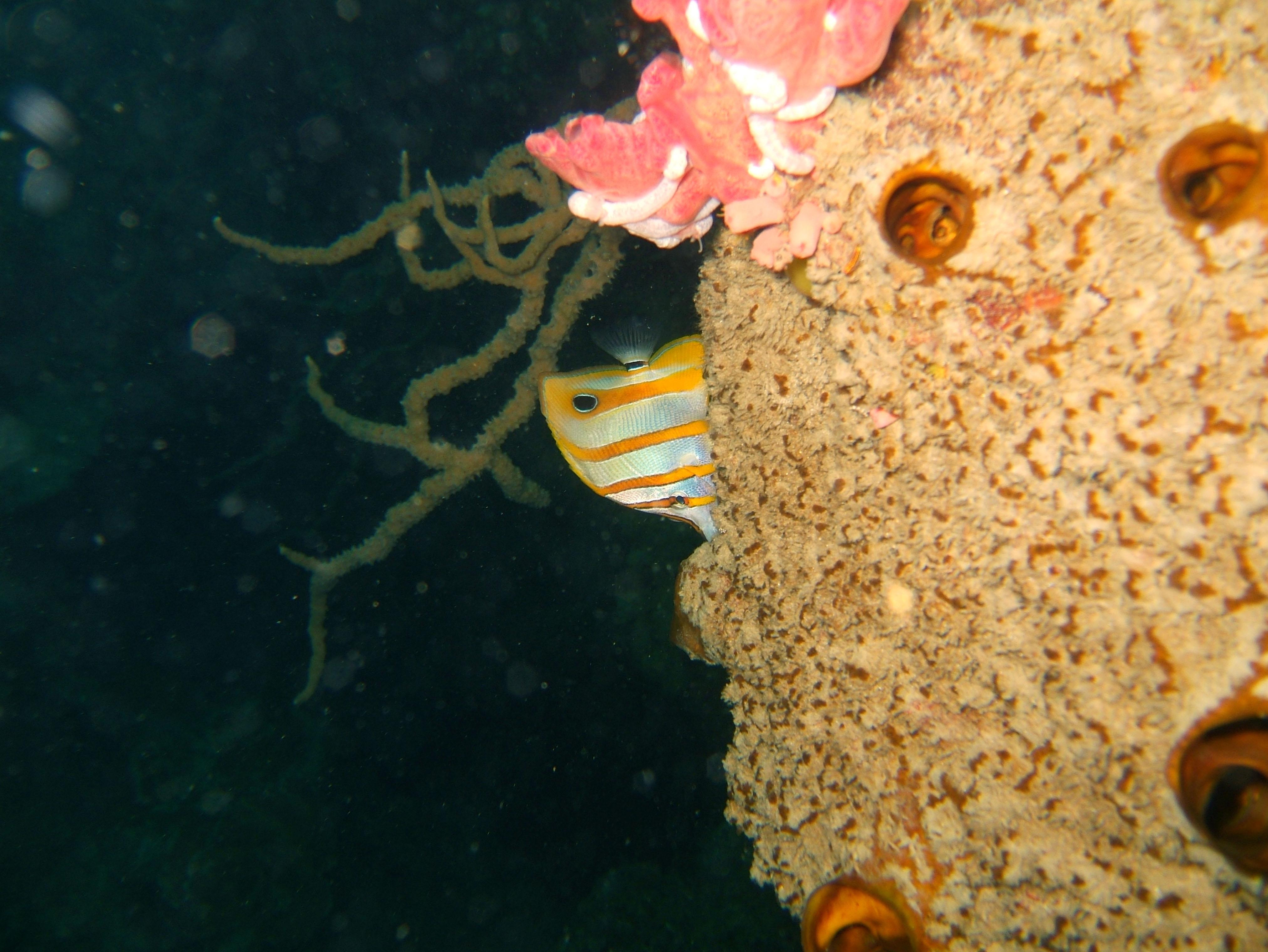 Coron dive site 11 Cay Angan Lake Baracuda Lake Reef July 2005 19
