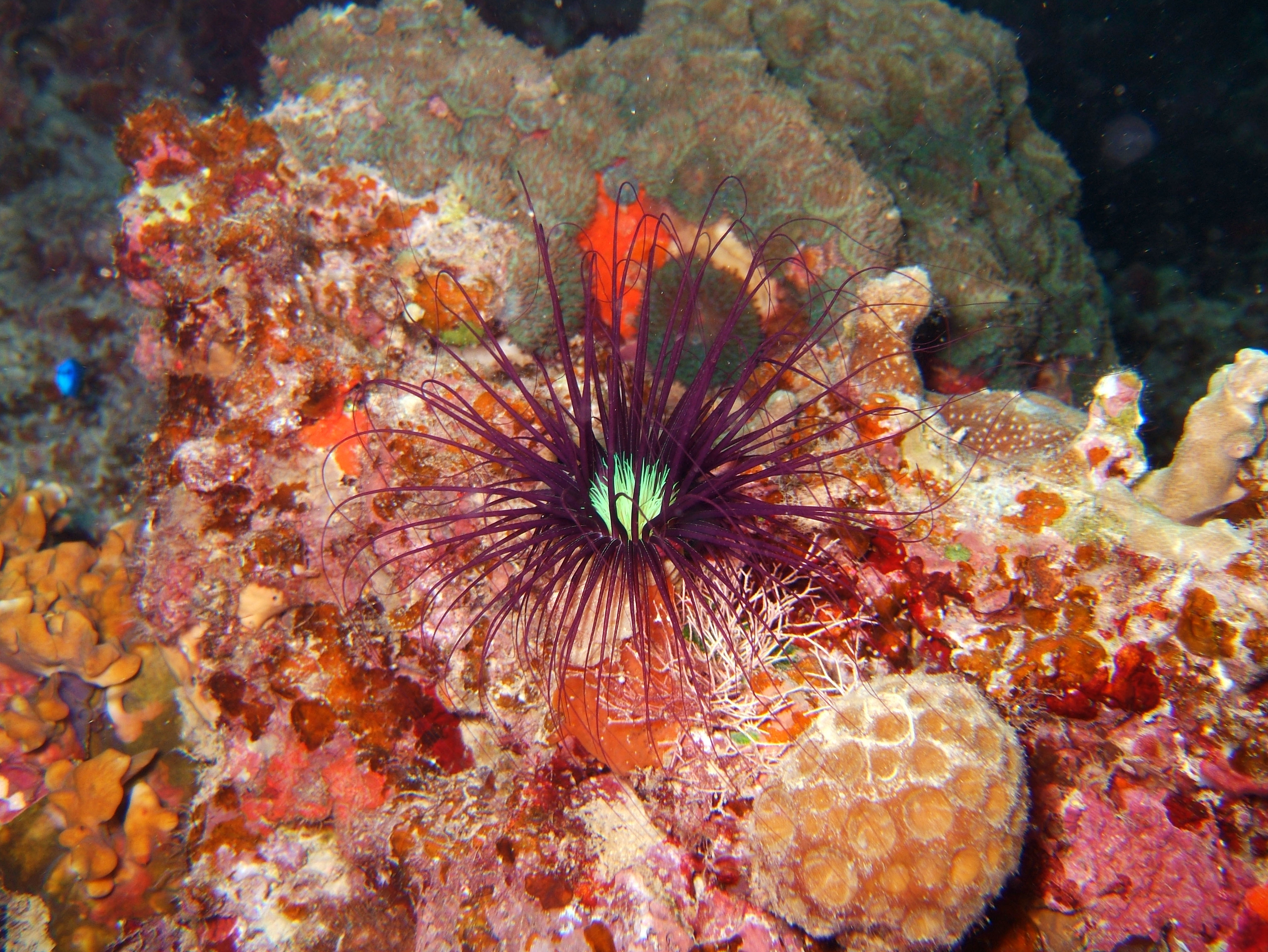 Coron dive site 11 Cay Angan Lake Baracuda Lake Reef July 2005 23