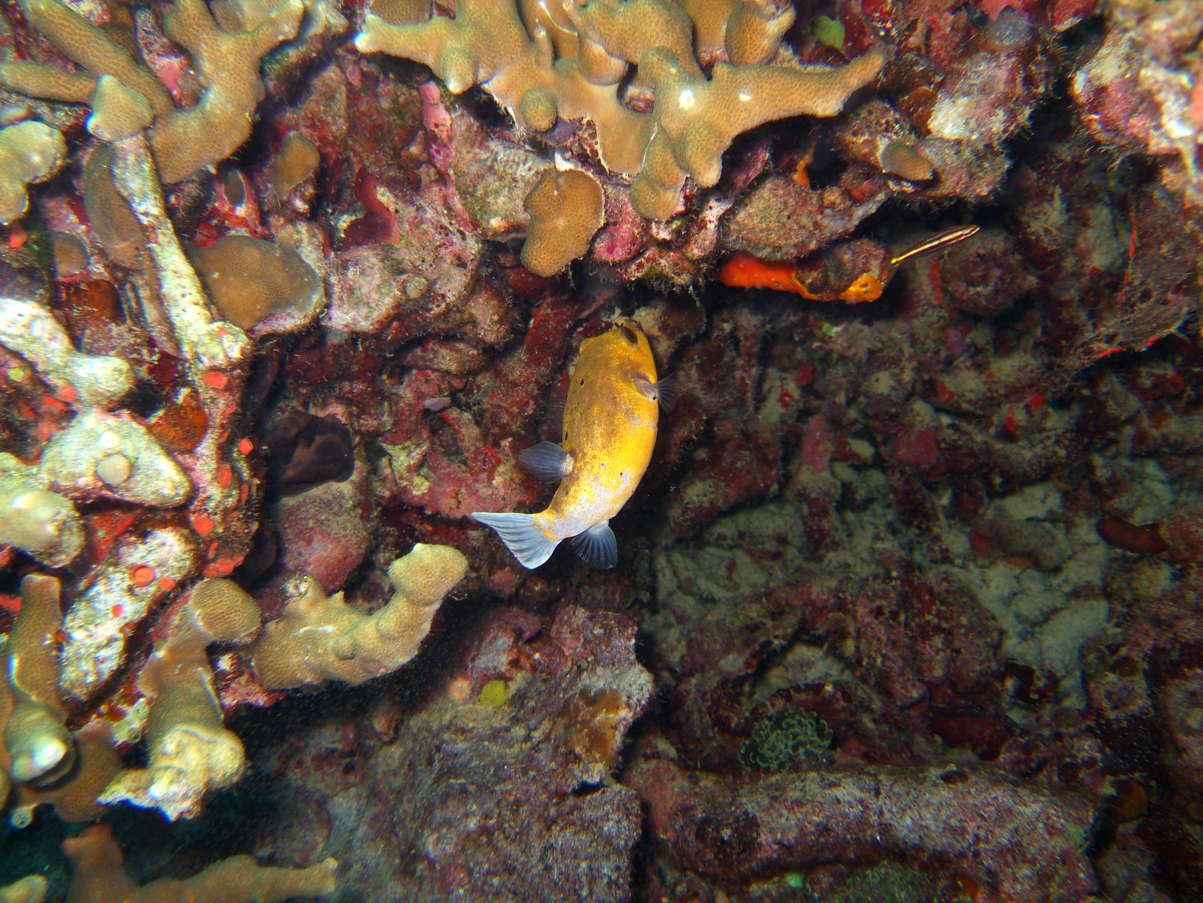 Coron dive site 11 Cay Angan Lake Baracuda Lake Reef July 2005 25