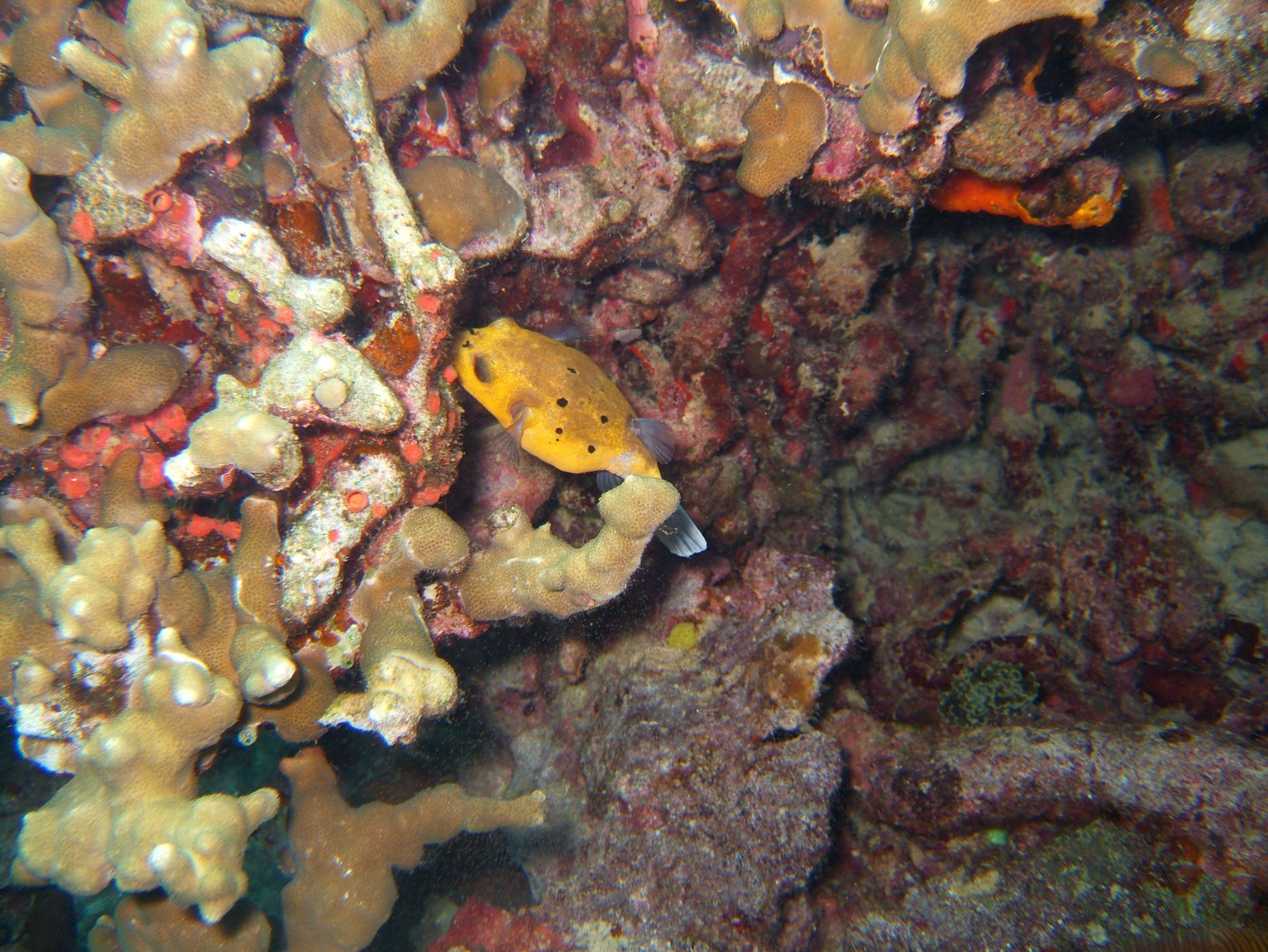 Coron dive site 11 Cay Angan Lake Baracuda Lake Reef July 2005 26