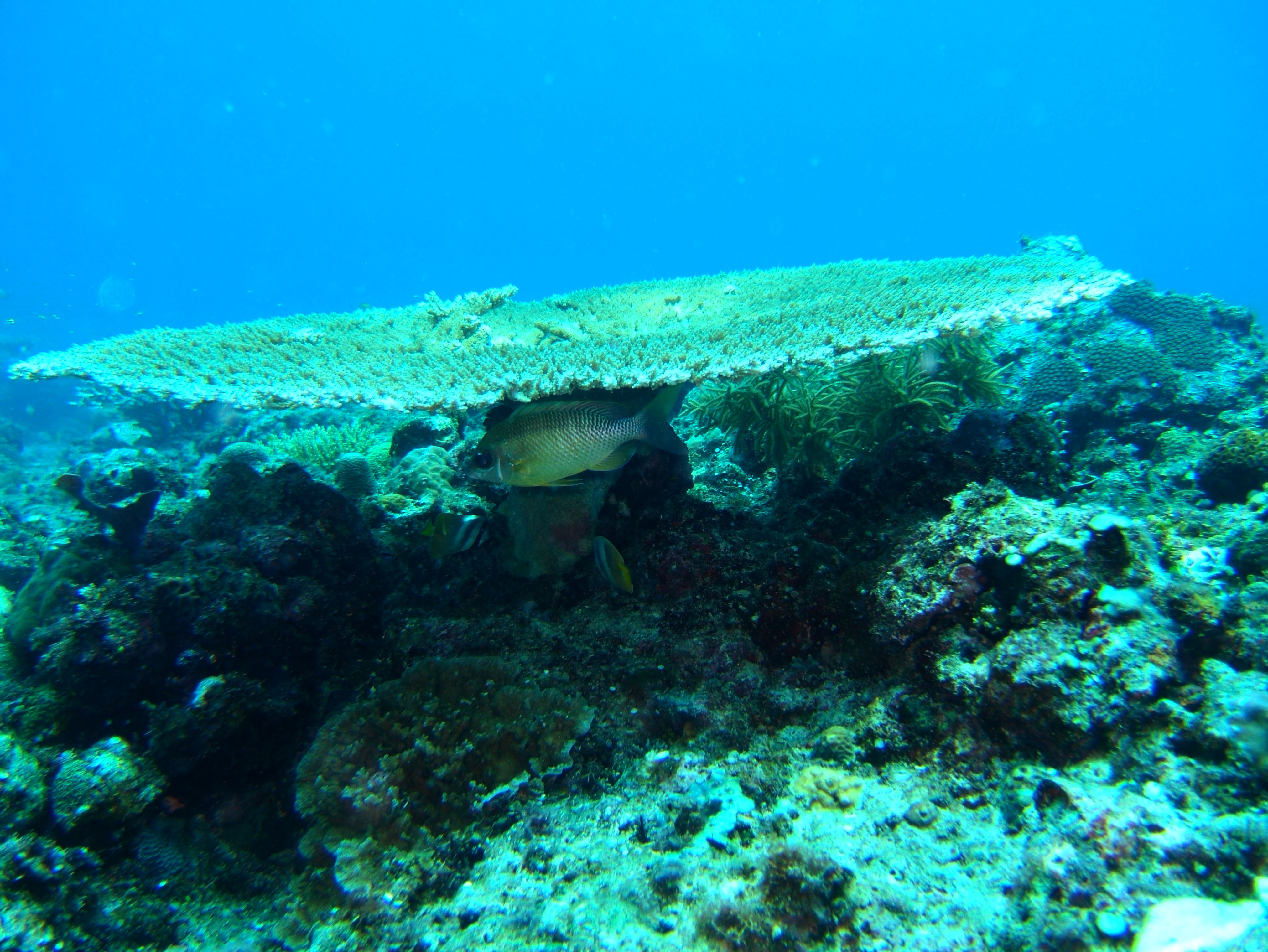Coron dive site 13 Gunters Cathedral Reef July 2005 26