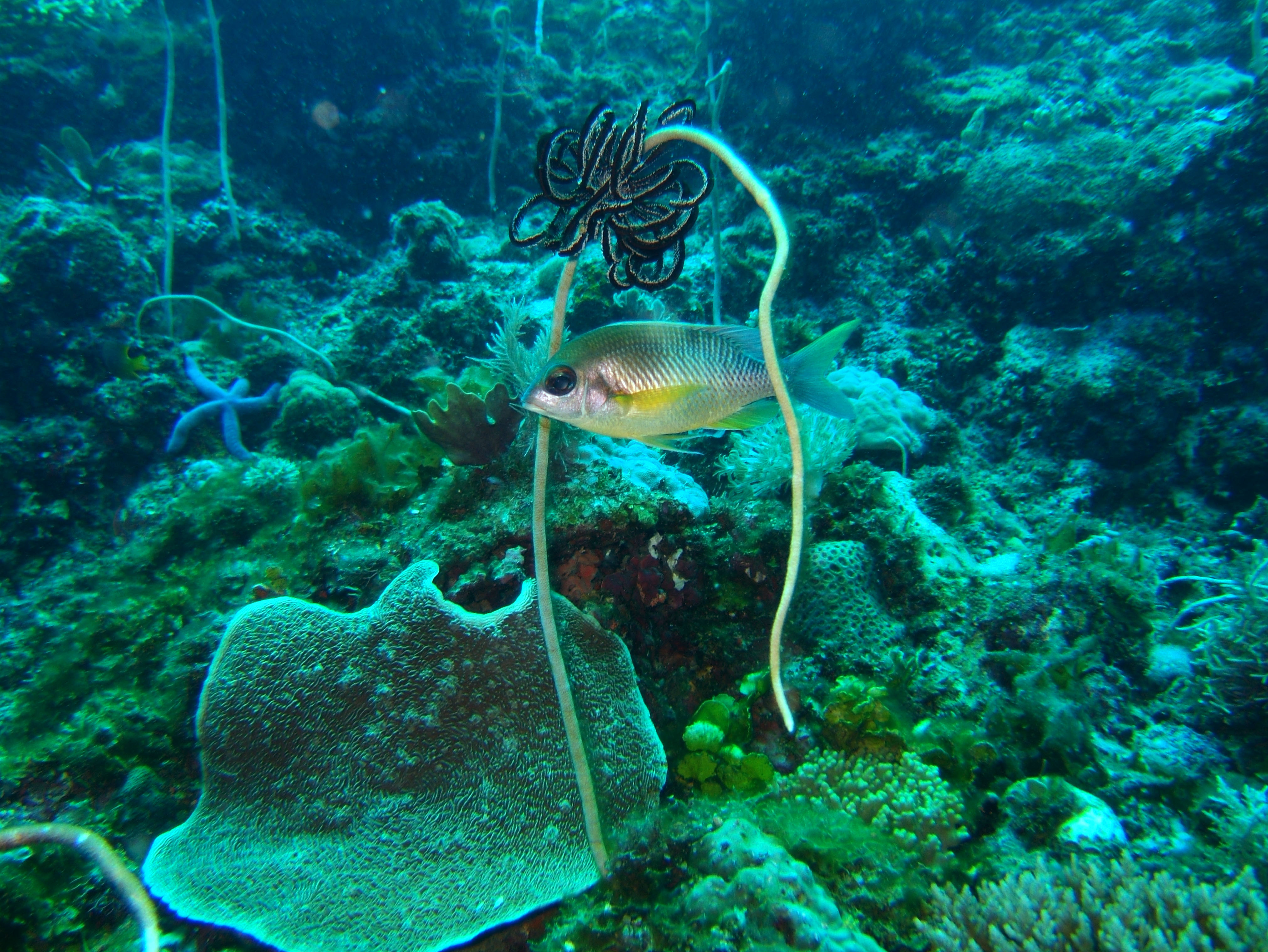 Coron dive site 13 Gunters Cathedral Reef July 2005 31