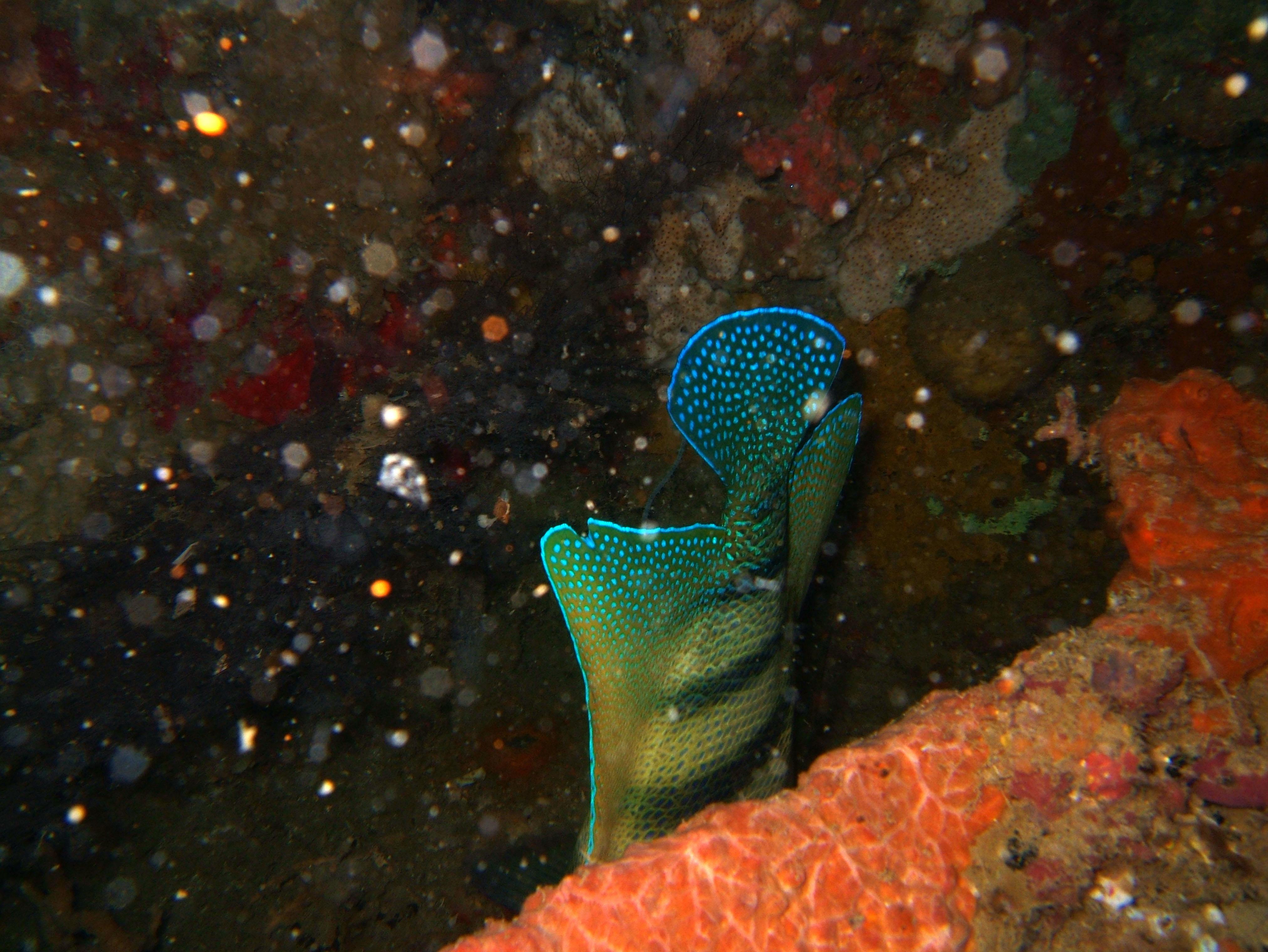 Coron dive site 2 Wreck dive IJN Taiei Maru July 2005 01