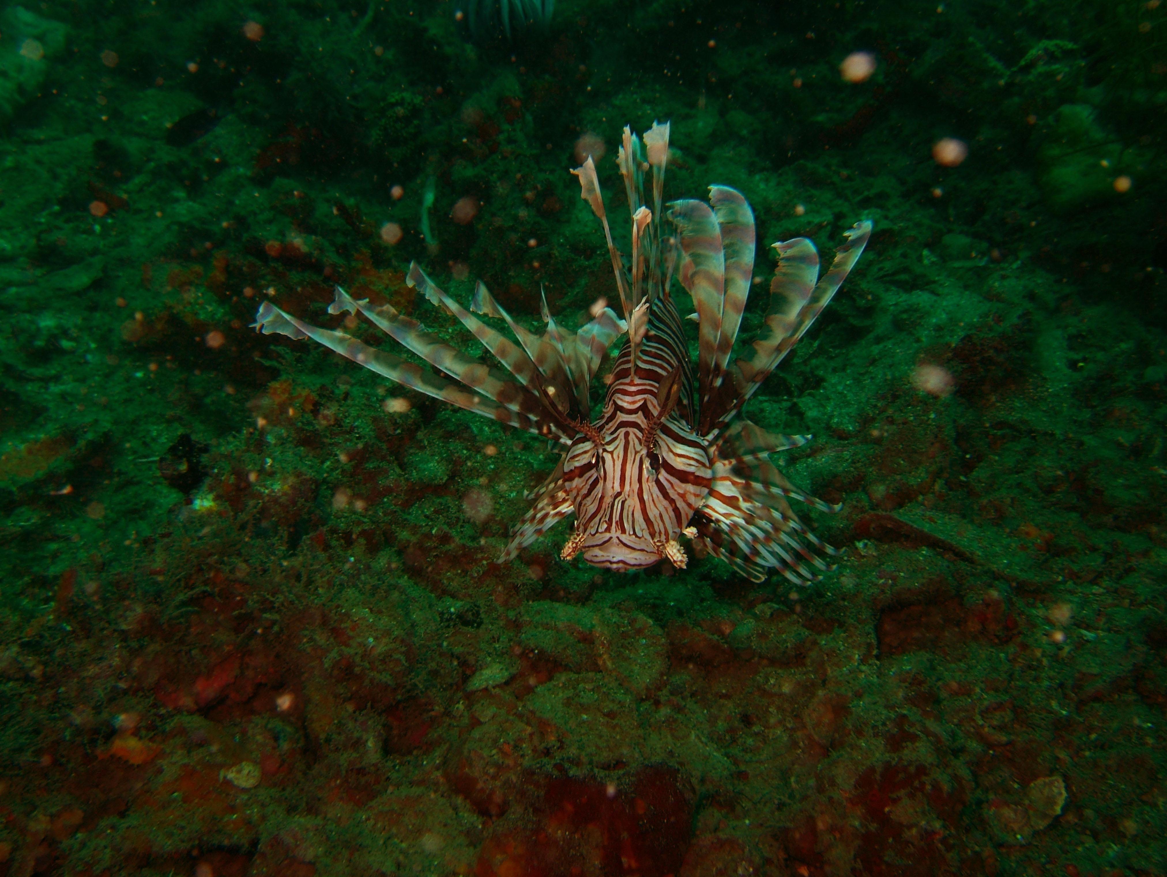 Coron dive site 2 Wreck dive IJN Taiei Maru July 2005 03