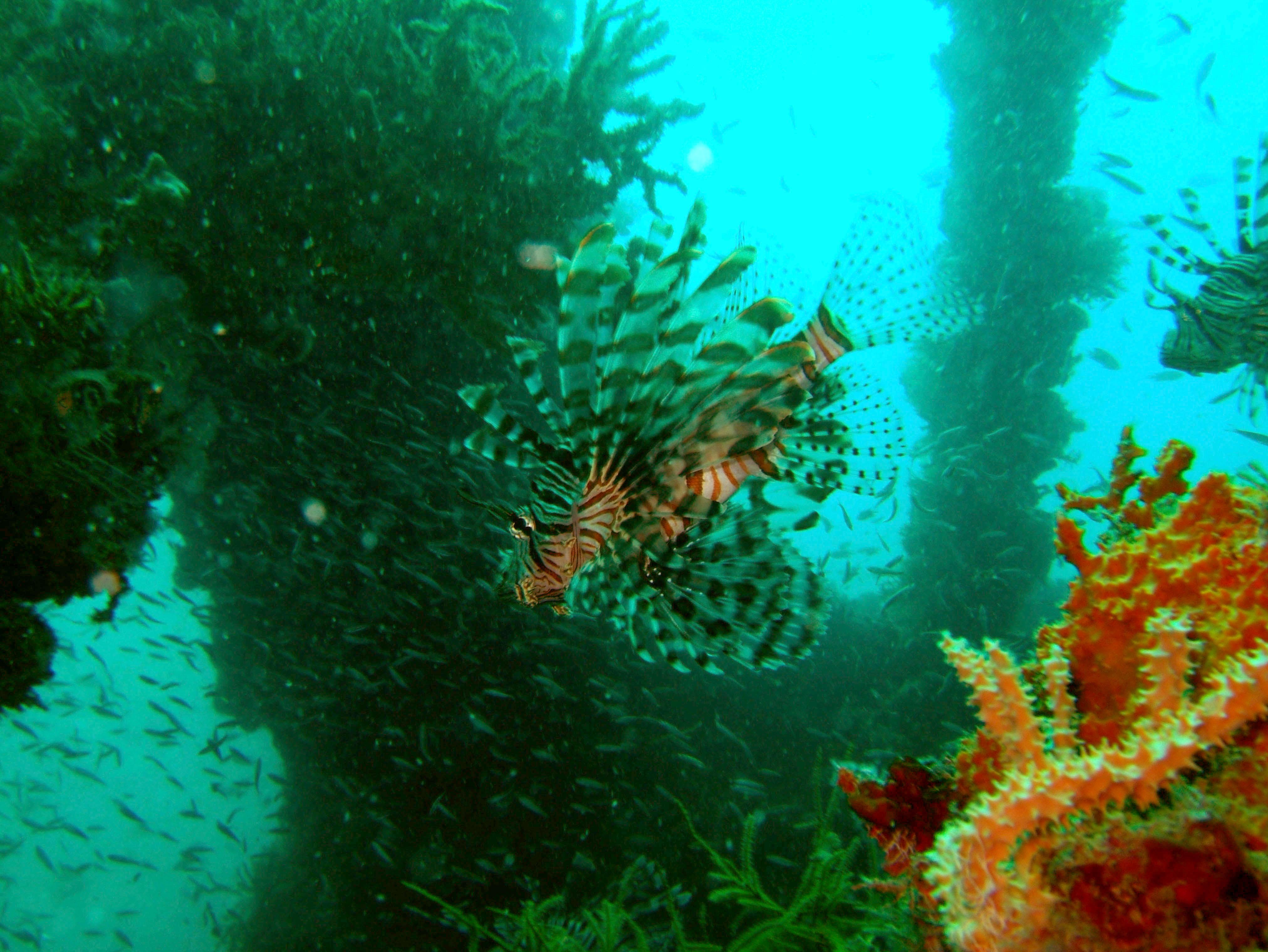 Coron dive site 2 Wreck dive IJN Taiei Maru July 2005 16