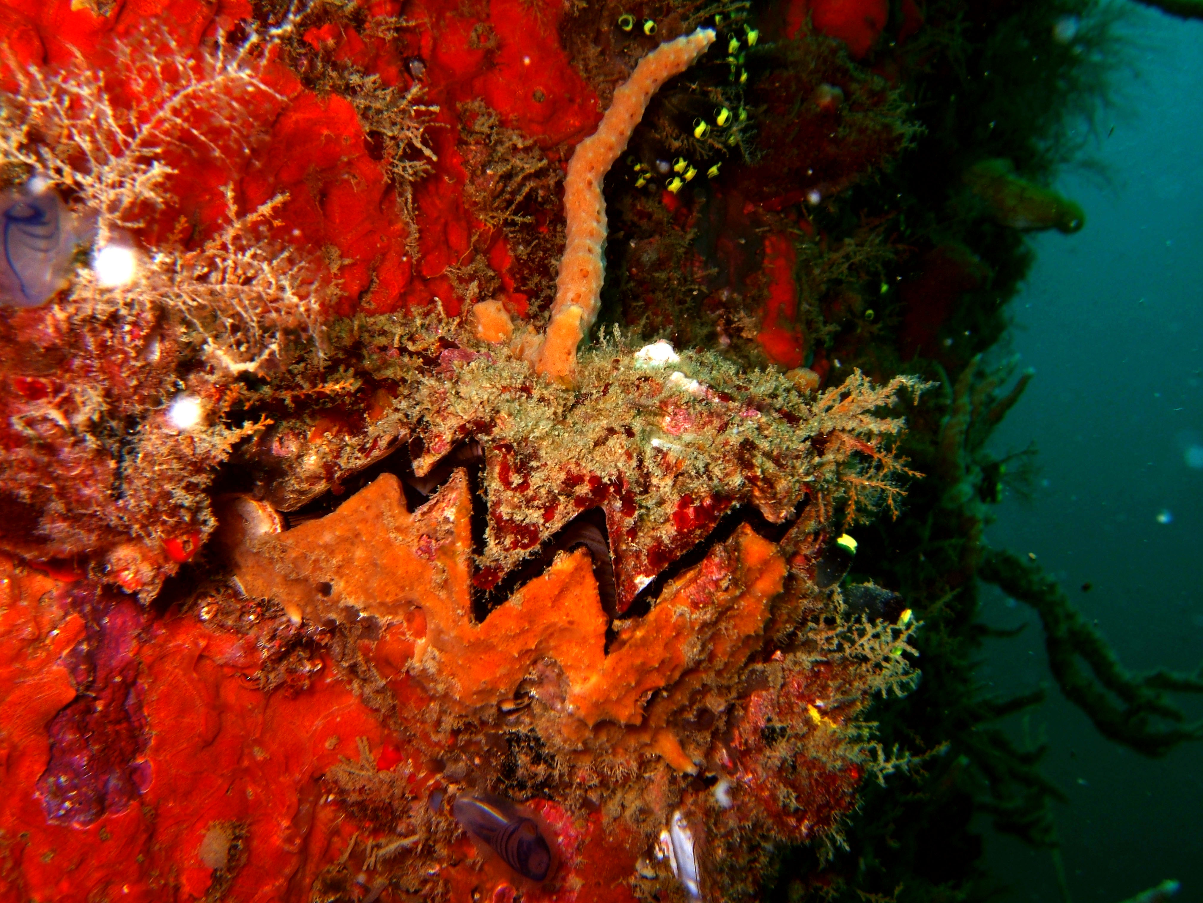 Coron dive site 2 Wreck dive IJN Taiei Maru July 2005 22