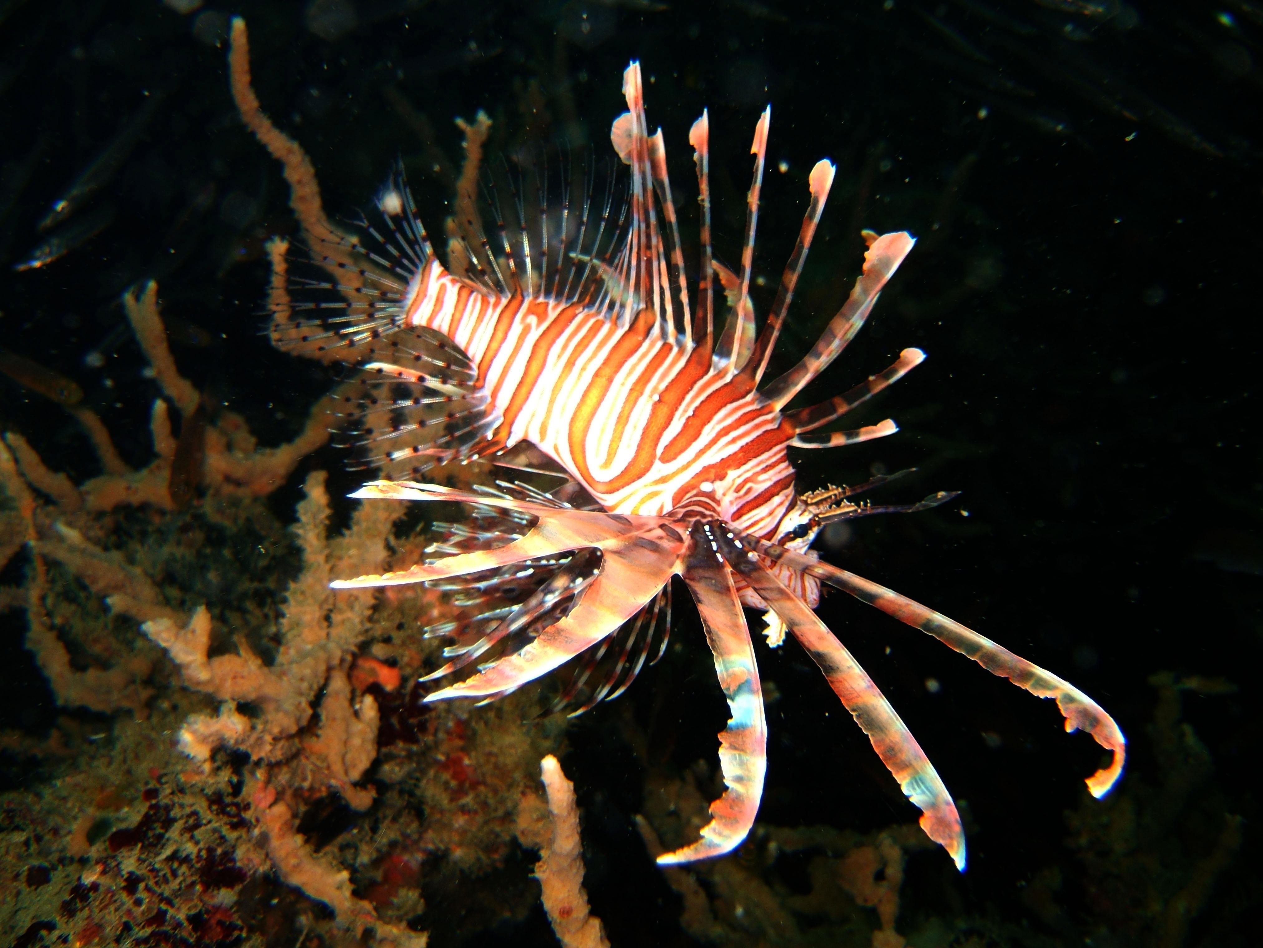 Coron dive site 2 Wreck dive IJN Taiei Maru July 2005 26